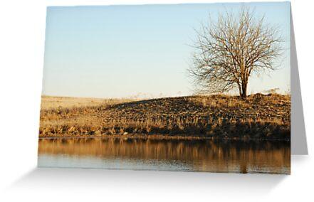 Lone Tree by Pond in Autumn by Suz Garten