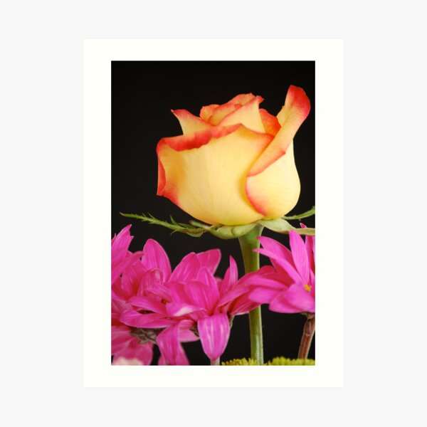 Yellow Rose with Pink Flowers Art Print