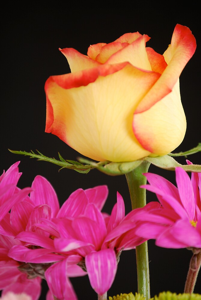 Yellow Rose with Pink Flowers by Suz Garten