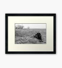 Labrador in Field Framed Print