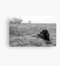 Labrador in Field Canvas Print