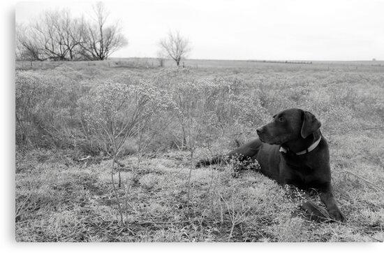 Labrador in Field by Suz Garten