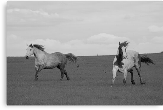 Paint Horse and Stormy by Suz Garten