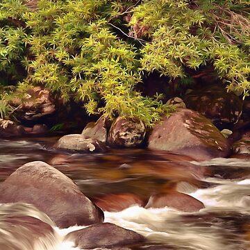 Rainforest Magic by OzCamera