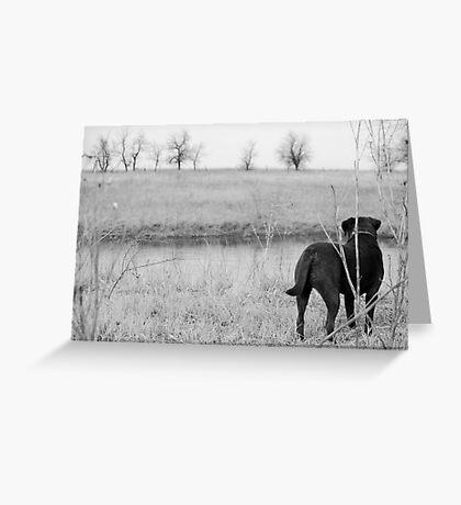 Labrador by Pond Greeting Card