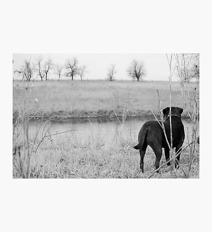 Labrador by Pond Photographic Print