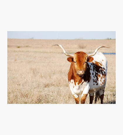 Longhorn Photographic Print