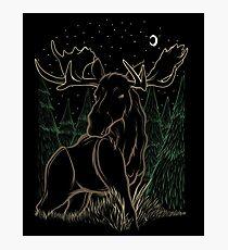 Canadian Bull Moose Photographic Print