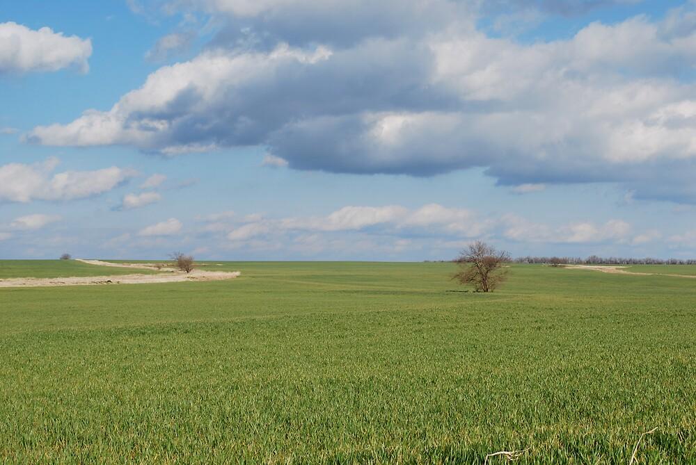 Big Sky and Kansas Wheat by Suz Garten