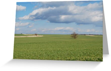 Big Sky and Kansas Wheat by Suz Garten