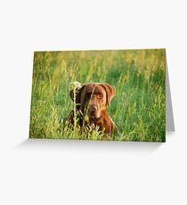 Labrador in Kansas Pasture Greeting Card