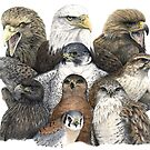 Raptors Montage by JedTaylor
