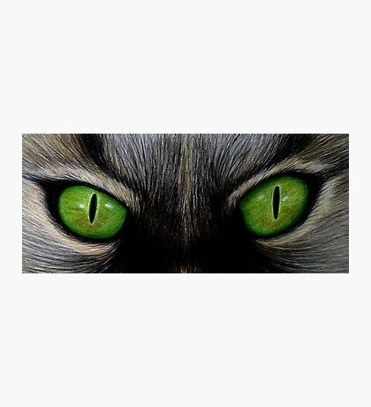 Cat Eyes Photographic Print
