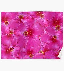 Hot Pink Hibiscus Poster