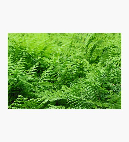 greenery Photographic Print