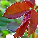 Droplets by John Spies