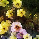 Calibrachoa Chorus by Mark Salmon
