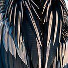 Anhinga Feathers by TJ Baccari Photography