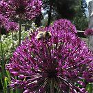 Bumble Bee & Allium by CarrieAnn
