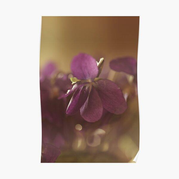 in violet dreams Poster