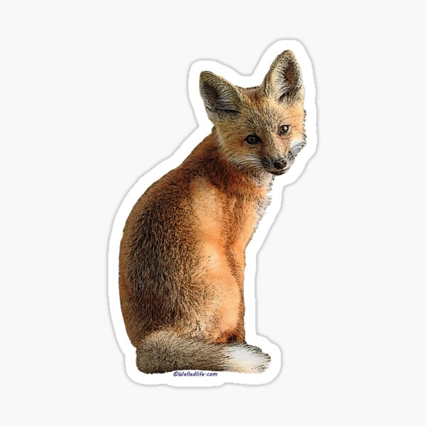 Fox Kit Sticker