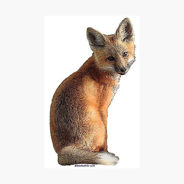 Fox Kit Photographic Print