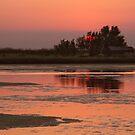 SUNSET by June Ferrol