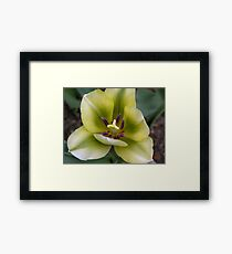 without a flaw Framed Print