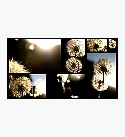 Dreams are soft thoughts that are blown in by the wind and grow in your mind Photographic Print