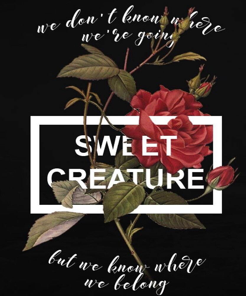 Harry Styles sweet creature lyrics by Shopbyam