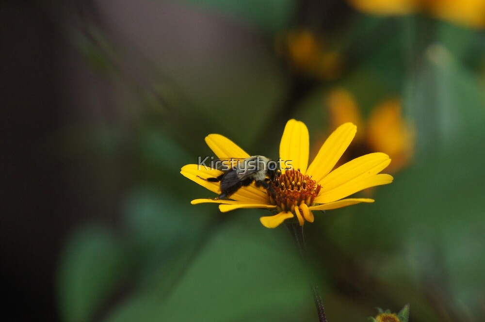 The Bee's Knees by Kirstyshots