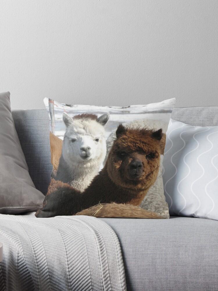Alpacas by Margarite H