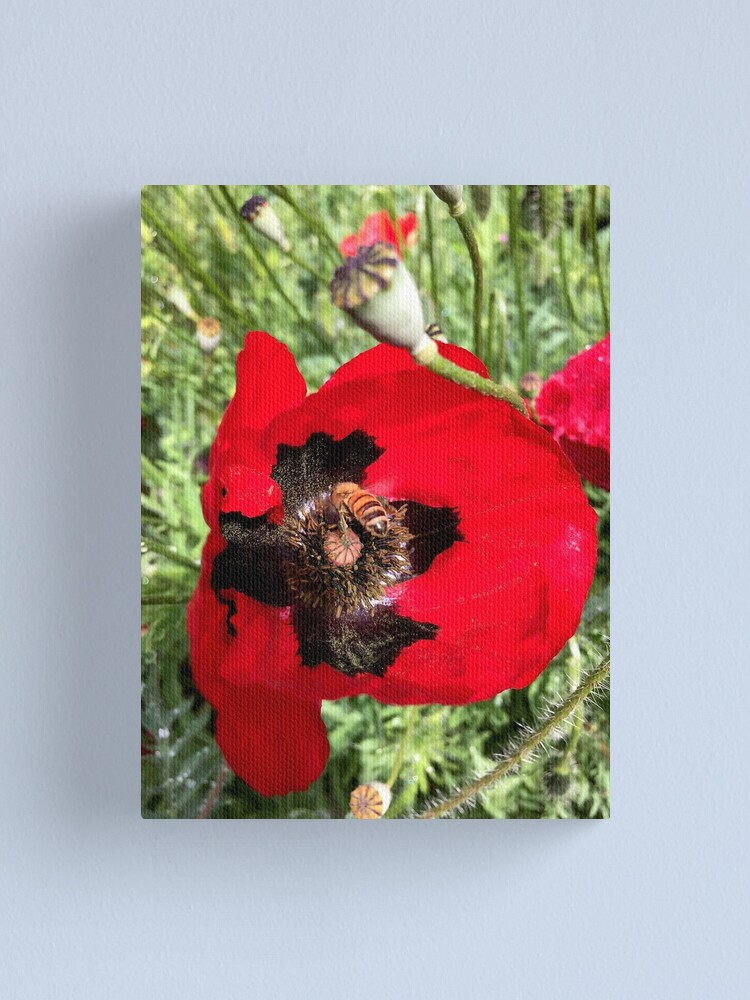 Alternate view of Poppy and Bee from A Gardener's Notebook Canvas Print