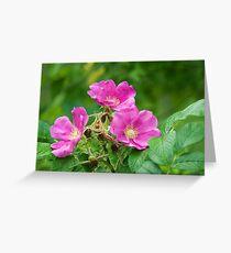 Wild Rose or Rugosa Rose Greeting Card