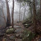 Gum trees in the mist, Blue Mtns National Park, NSW, Australia by GeorgeOne