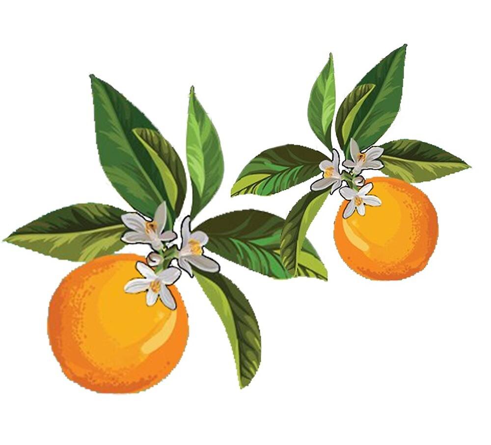 Oranges and flowers by adampervez