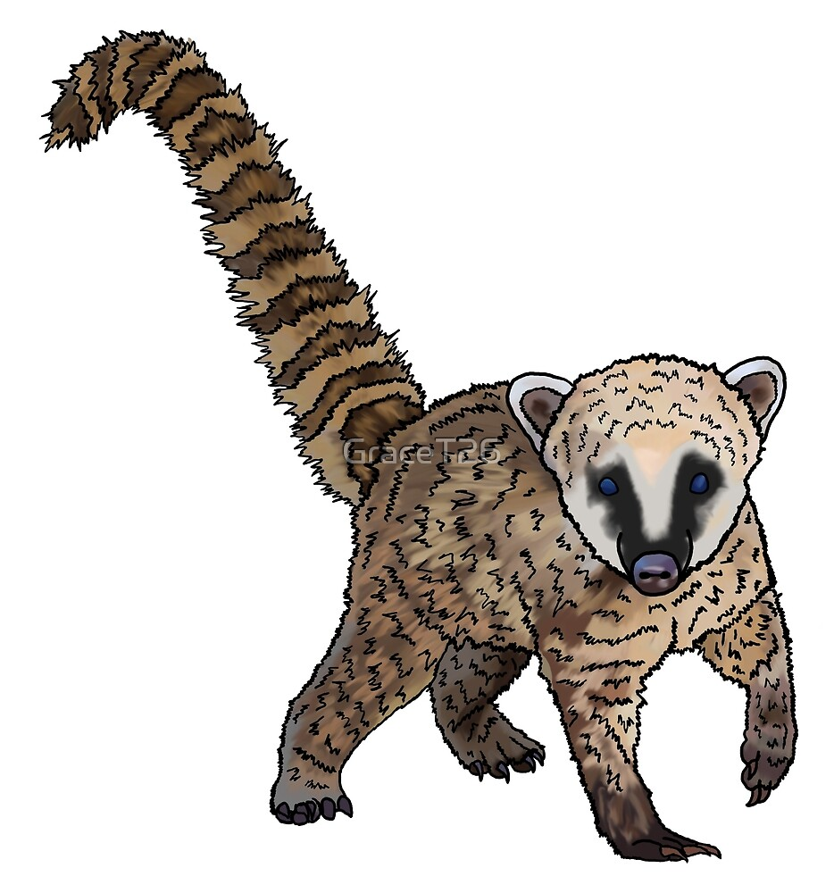Coati by GraceT26