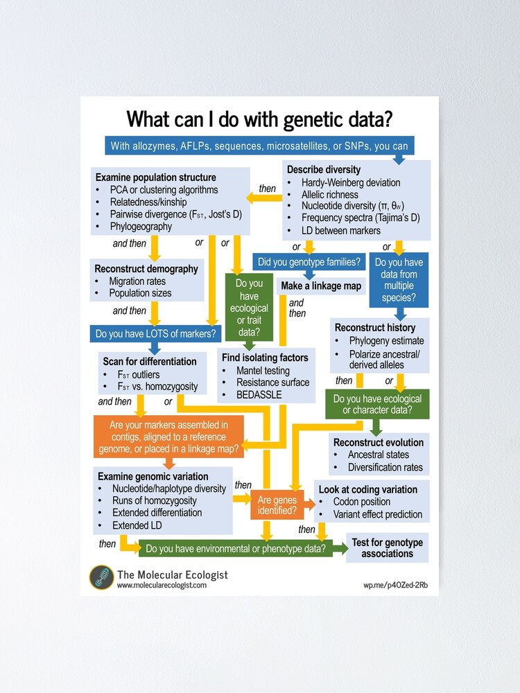 Alternate view of Molecular Ecology, the Flowchart Poster