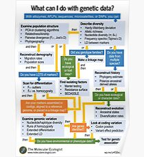 Molecular Ecology, the Flowchart Poster