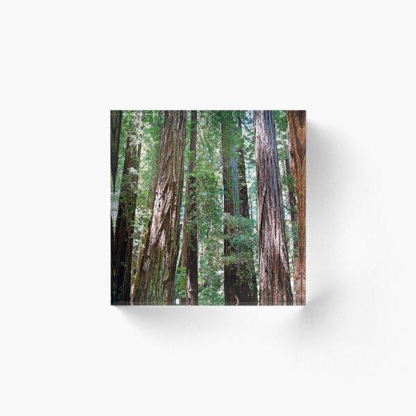 Muir Woods Study 15  Acrylic Block