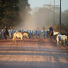 Cattle drive by cs-cookie