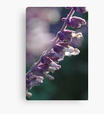 Soft Purple Flower Macro Canvas Print