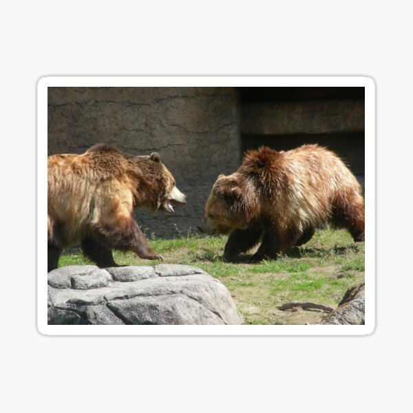Grizzly Bears 002 Sticker