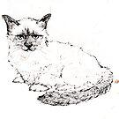 Ragdoll Kitten by Roz McQuillan