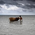 taking a dip by OliPhotography