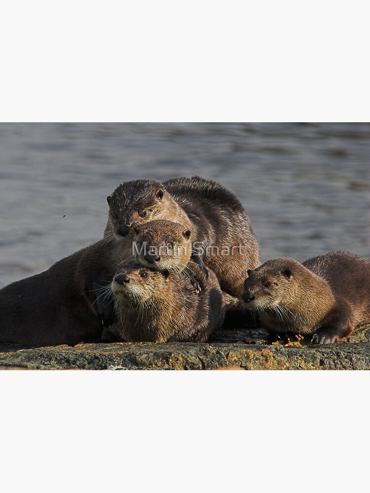 Whole Otter Love by MartinSmart