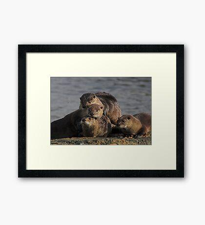 Whole Otter Love Framed Print