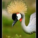 Crested Crane by Andy Beattie