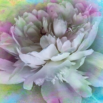 The Beautiful Art Of A Peony  by Gypsykiss