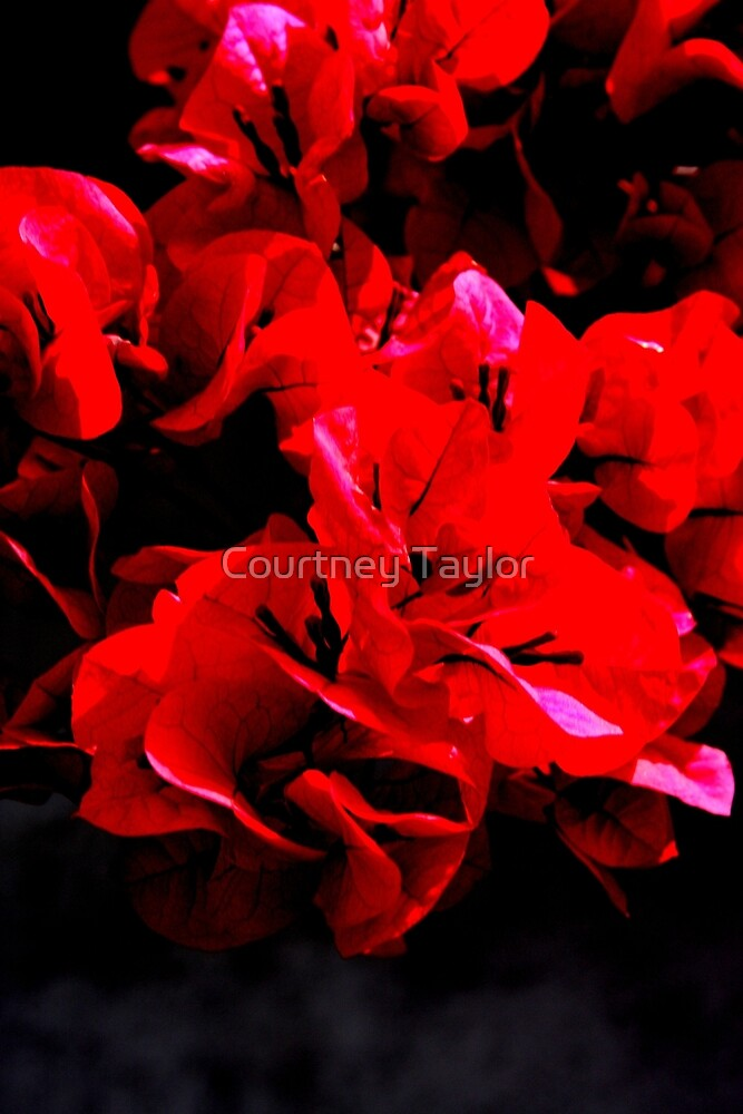 Ulra red flower by Courtney Taylor